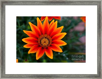 A Beautiful Beginning Framed Print by Syed Aqueel