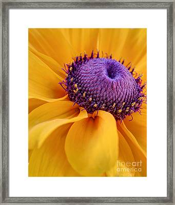 A Beautiful Black Eye Framed Print