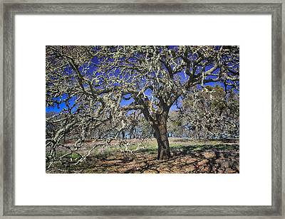 A Beautiful Mess Framed Print by Laurie Search