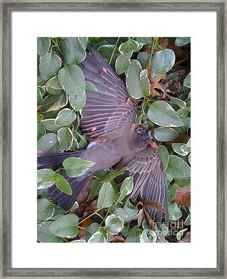 A Beautiful Spirit Framed Print