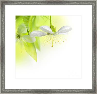 A Beautiful Spring Flowers Framed Print by Boon Mee