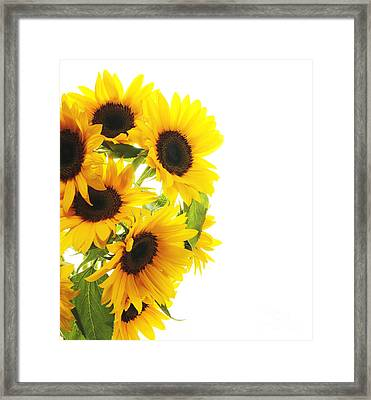 A Beautiful Sunflower Framed Print by Boon Mee