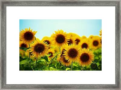A Beautiful Sunflower Field Framed Print
