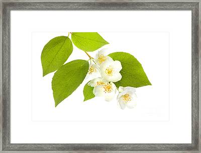 A Beautiful White Flower Framed Print by Boon Mee