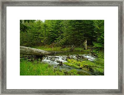 A Beaver Dam Overflowing Framed Print by Jeff Swan