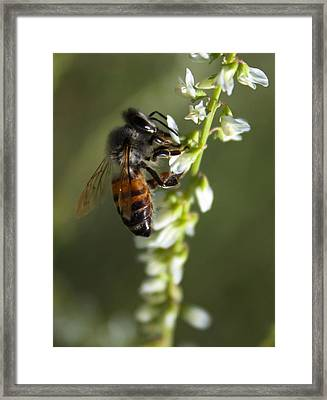 Framed Print featuring the photograph A Bee About His Business by Richard Stephen