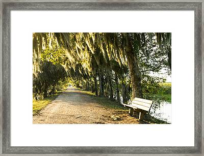 A Bench Under Golden Spanish Moss Framed Print by Ellie Teramoto