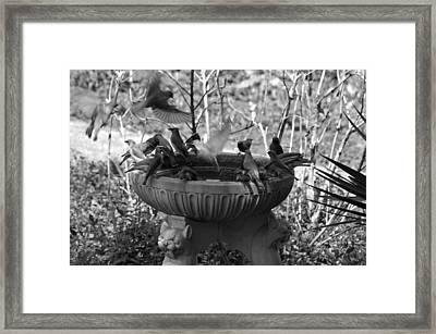 A Bevy Of Birds In Black And White Framed Print by Suzanne Gaff
