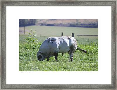 A Big Big Bull  Framed Print by Jeff Swan