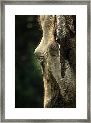 A Big Head Framed Print by Achmad Bachtiar