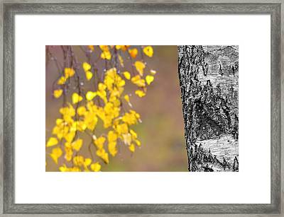 A Birch At The Lake Framed Print by Tommytechno Sweden