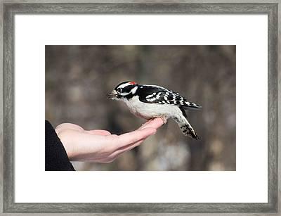 A Bird In The Hand Framed Print