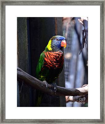 A Bird Of Many Colors Framed Print by Mel Steinhauer