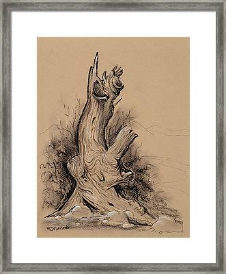 A Bit Gnarly Framed Print
