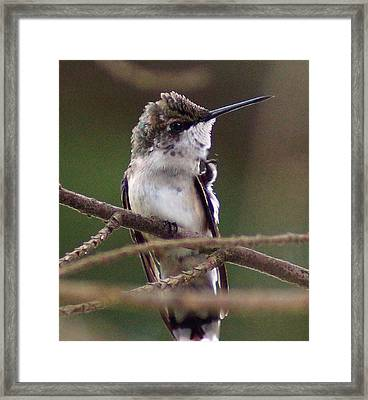 A Bit Of An Itch Framed Print by Kim Pate
