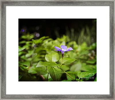 Framed Print featuring the photograph A Bit Of Purple by Maria Janicki