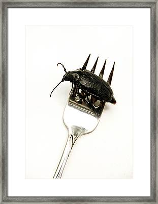 A Bite Of Water Bug Framed Print by Amy Cicconi