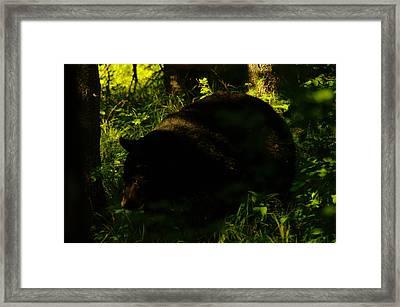 A Black Bear Framed Print by Jeff Swan