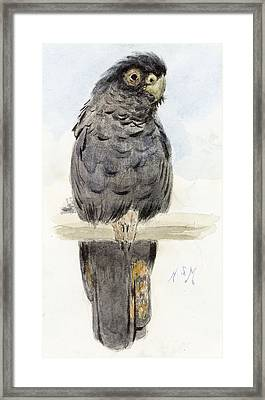 A Black Cockatoo Framed Print by Henry Stacey Marks