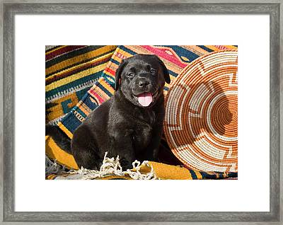 A Black Labrador Retriever Puppy Framed Print by Zandria Muench Beraldo
