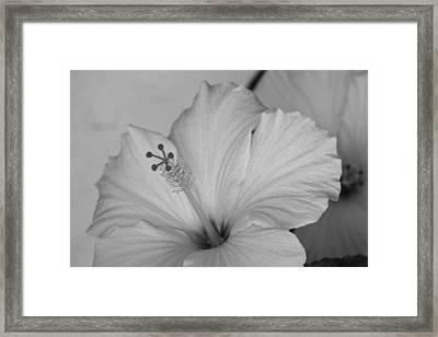 A Blending Flower Framed Print by Shweta Singh