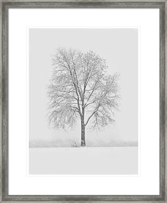 A Blizzard Moment Framed Print by Nancy Edwards