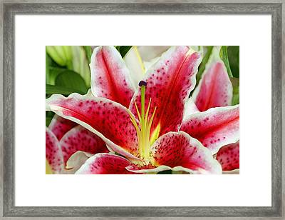 A Blooming Flower Framed Print by Raven Regan