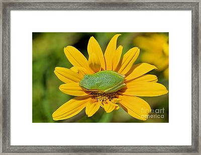 A Blooming Nap  Framed Print by Davids Digits