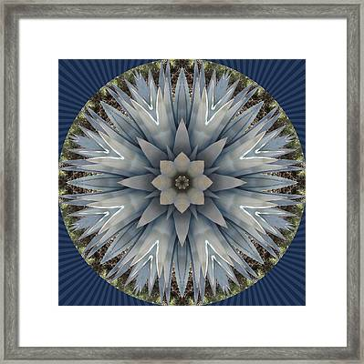 A Blue Agave Framed Print