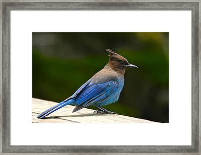A Blue Moment Framed Print