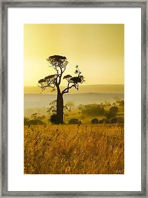 A Boab Sunrise Framed Print