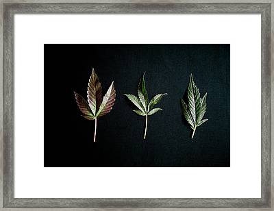 A Bold Statement With Leaves On A Black Framed Print