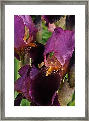 A Bouquet Of Lilies Framed Print by Sabine Edrissi