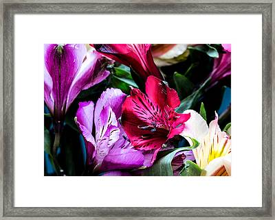 A Bouquet Of Peruvian Lilies Framed Print
