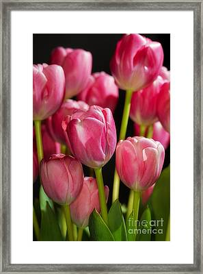 Framed Print featuring the photograph A Bouquet Of Pink Tulips by Nick  Biemans