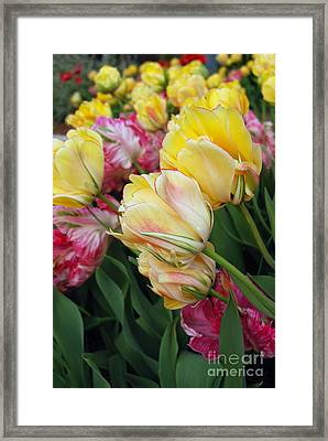 A Bouquet Of Tulips For You Framed Print by Eva Kaufman