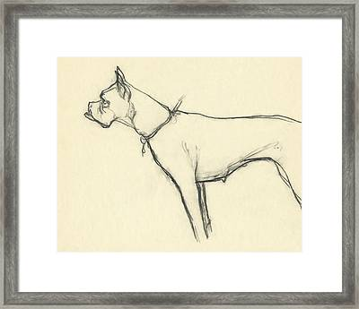 A Boxer Dog Framed Print