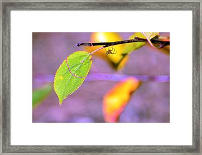 A Branch With Leaves Framed Print by Tommytechno Sweden