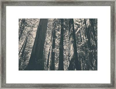 A Breath Of Fresh Air Framed Print by Laurie Search