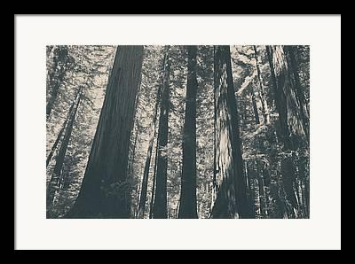 Nature Shadows Framed Prints