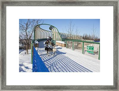 A Bridge In The Iditarod  Framed Print by Tim Grams