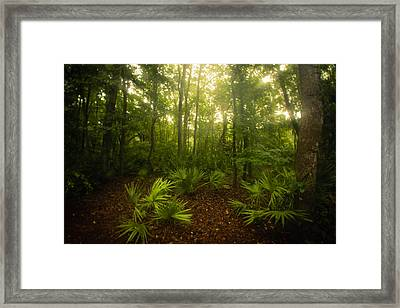 A Bright Morning Framed Print