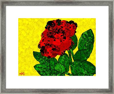 A Bright Red Rose For My Honey Framed Print