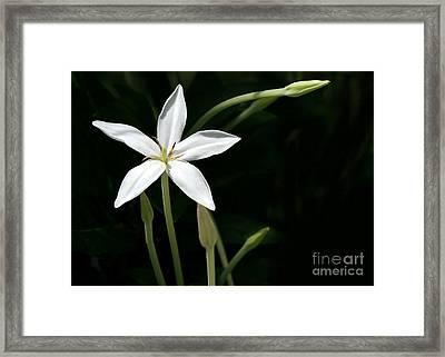 A Bright White Star Framed Print