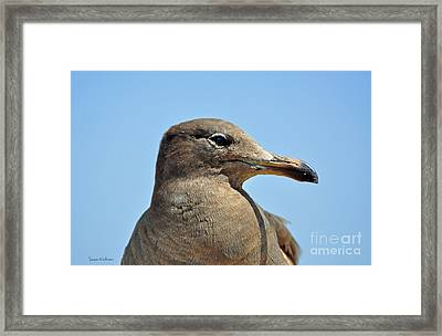A Brown Gull In Profile Framed Print