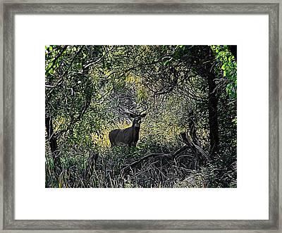 A Buck Digital Art Framed Print
