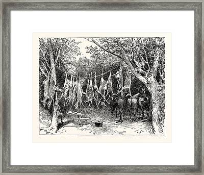 A Buck-hunting Excursion In South Africa Our Larder Framed Print by South African School