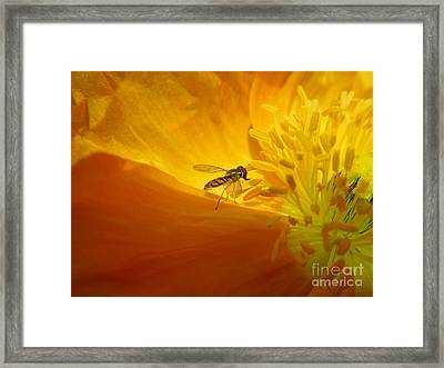 A Bug And A Green Inner Glow Framed Print