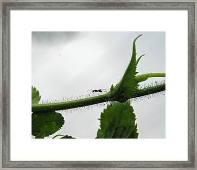 A Bugs Life Framed Print by Gopan G Nair