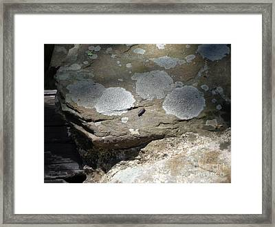 Framed Print featuring the photograph A Bug's World by Christina Verdgeline